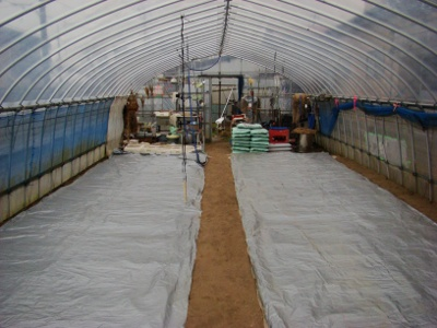 Planted Rice in a Greenhouse, Olive English英会話